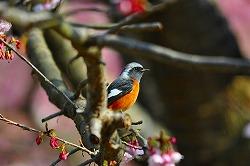 42 3月白野江植物園.jpg