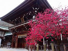 52 3月 宮地嶽神社.jpg