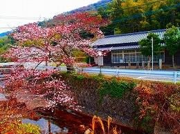 72 3月 名もなき桜.jpg
